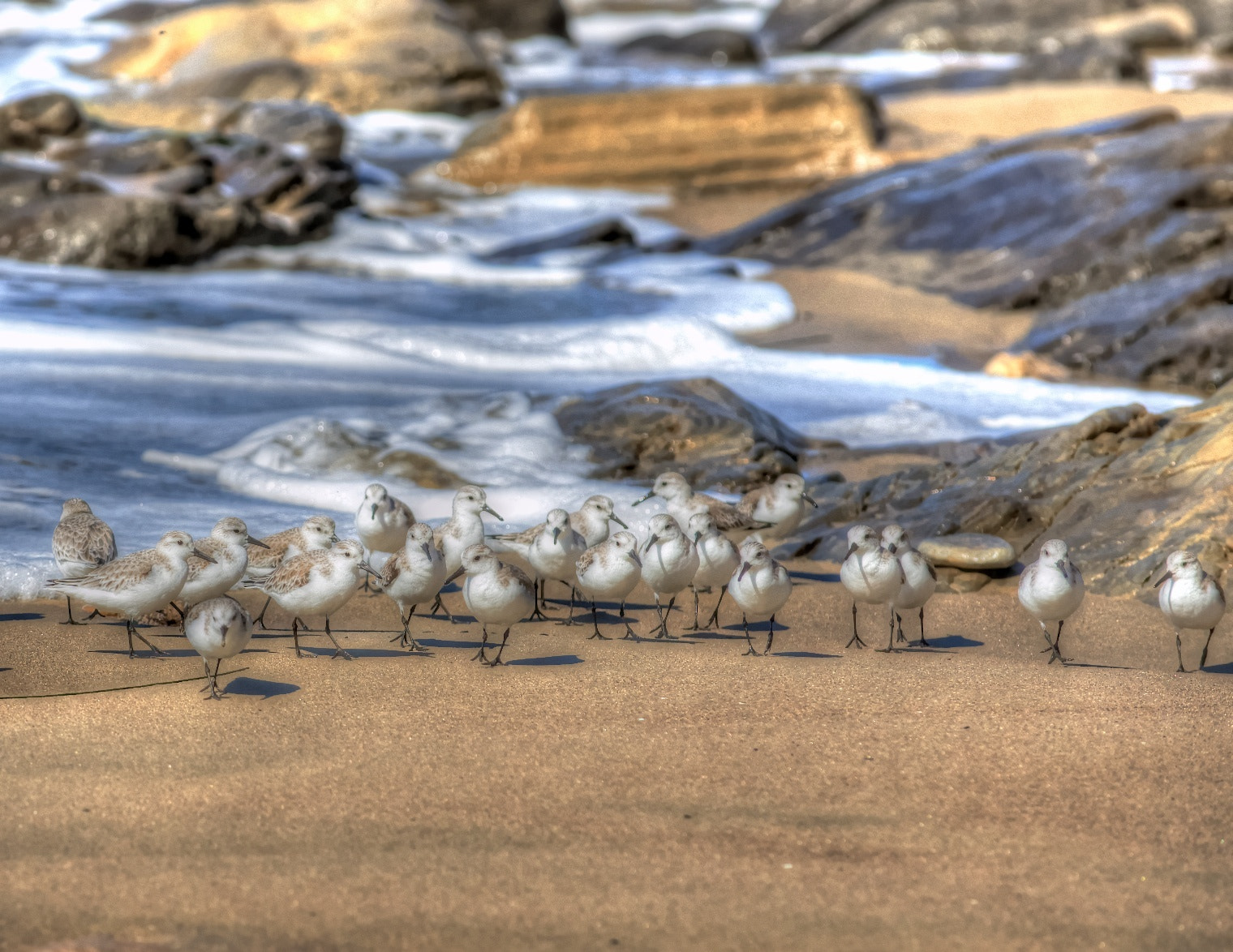 Photograph Plovers in Jalama Beach by Elliott Lee on 500px