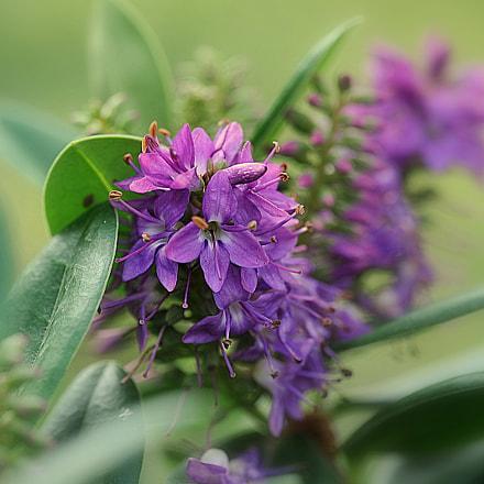wıld flower, Nikon D700, Sigma APO Macro 150mm F2.8 EX DG HSM
