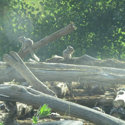 Colorado squirrels, Canon POWERSHOT SX420 IS