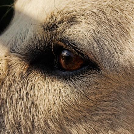 Cisco's Eyes, Nikon COOLPIX L320