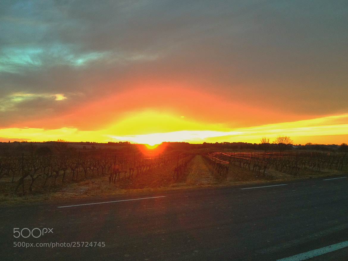 Photograph Sunrise in the vineyards by richard cauchy on 500px