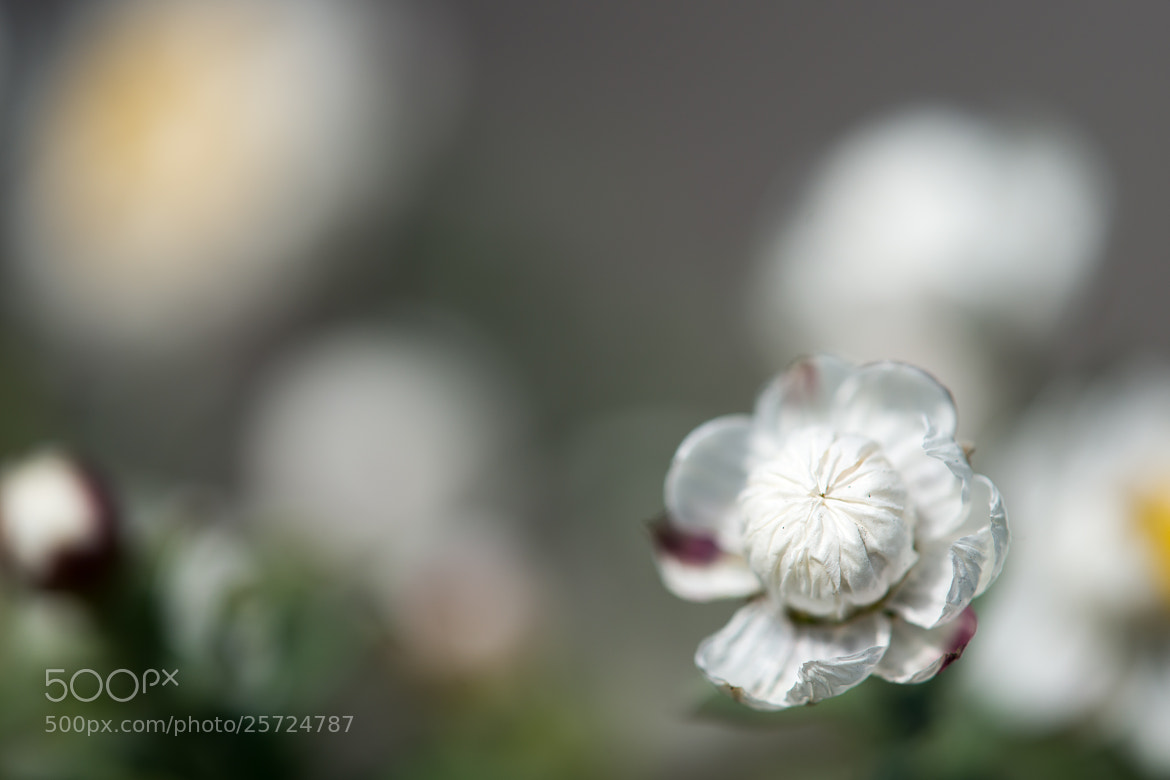 Photograph Floral hairpin by marbee .info on 500px
