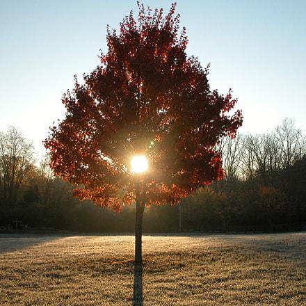 Morning Tree Sunrise, Nikon E5700