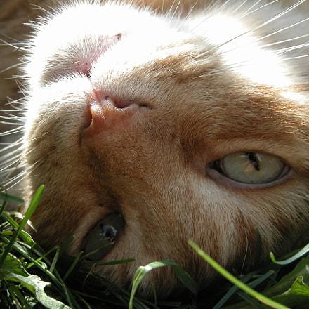 Rolled Over Cat, Nikon E5700
