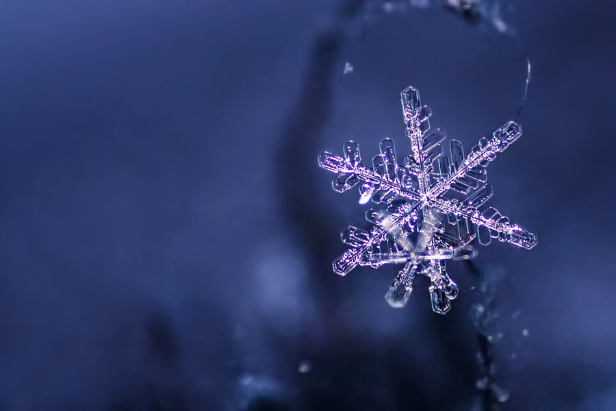 Photograph Winter star by Heaven Man on 500px
