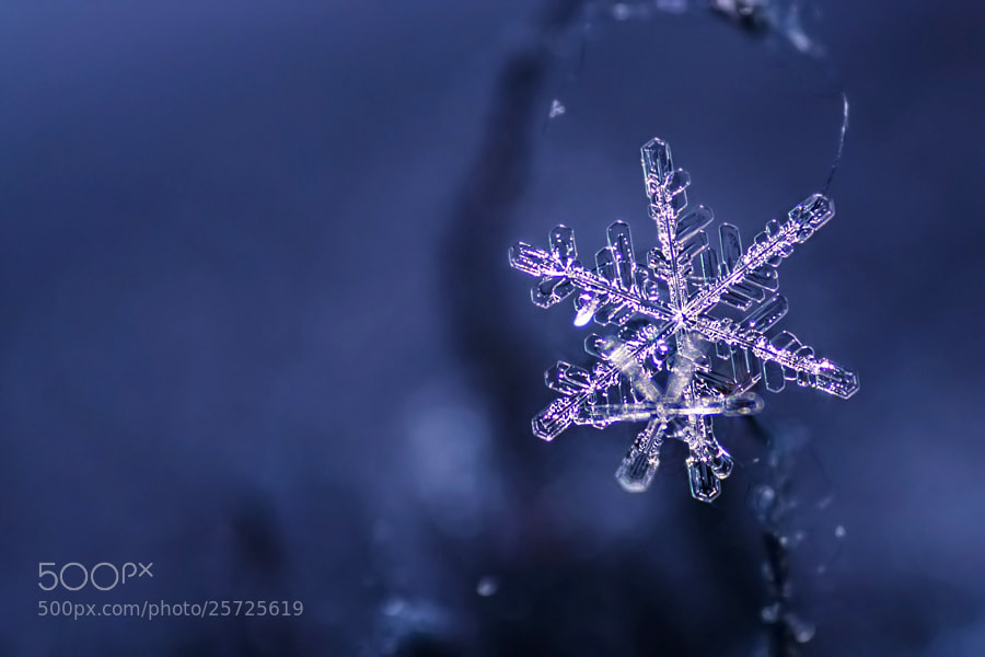 Winter star by Heaven Man on 500px.com