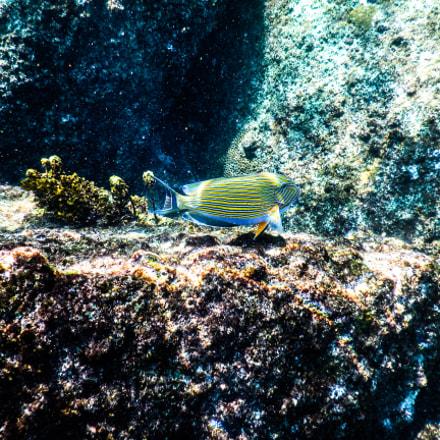 Seychelles St Pierre Lslet, Nikon COOLPIX AW130s