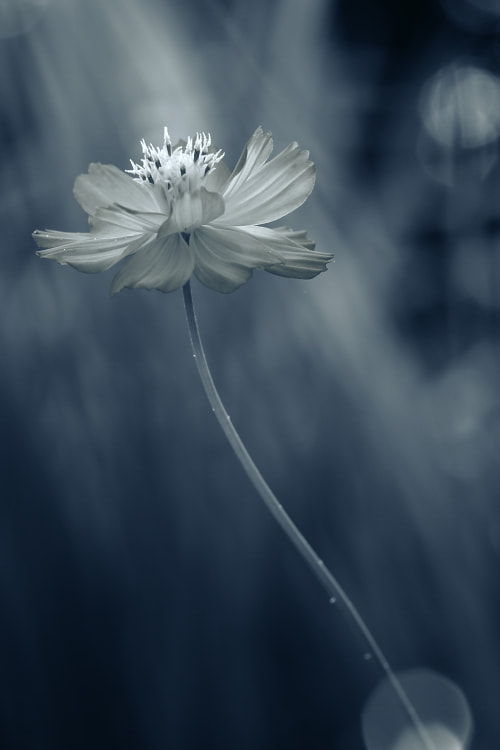 Photograph Faded Love by Shihya Kowatari on 500px