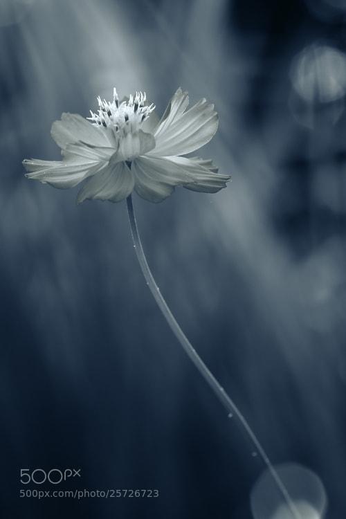 Photograph Faded Love by Shihya Kowatari on 500px