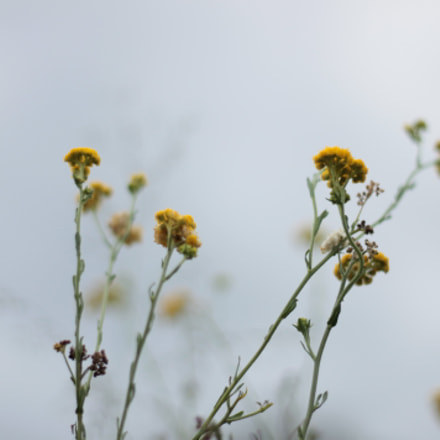 IMG, Canon EOS 1100D, Canon EF 50mm f/1.8 II