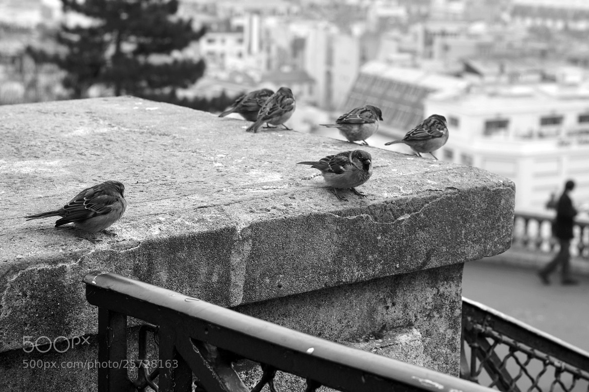 Photograph Birds of Paris by Fabrice BARDES on 500px
