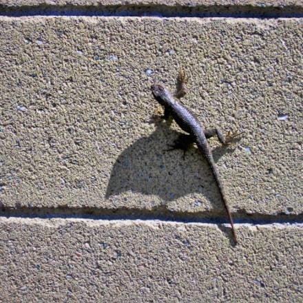 lizard on cindr, Canon POWERSHOT A510
