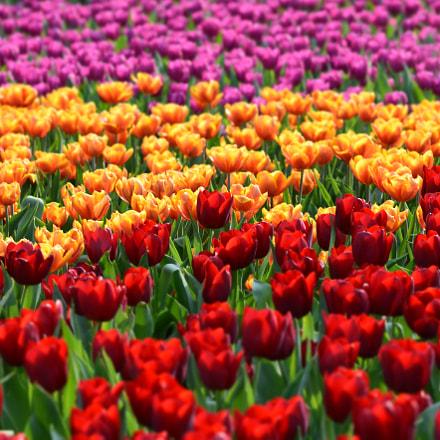 Colors, Nikon D7200, AF Nikkor 85mm f/1.8D