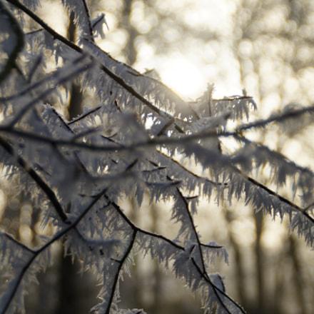 Winter Days, Sony SLT-A37, Minolta/Sony AF DT 18-200mm F3.5-6.3 (D)