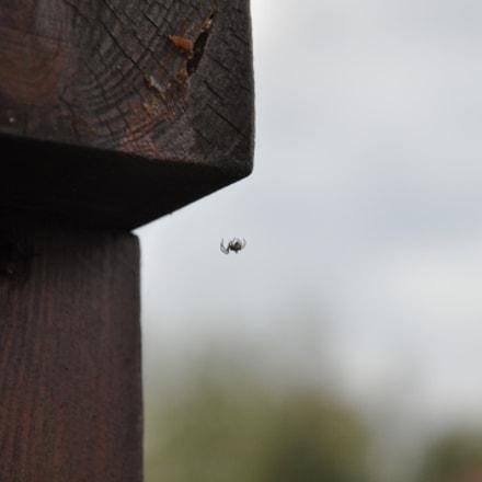 Spider, Nikon D90, AF-S DX VR Zoom-Nikkor 16-85mm f/3.5-5.6G ED