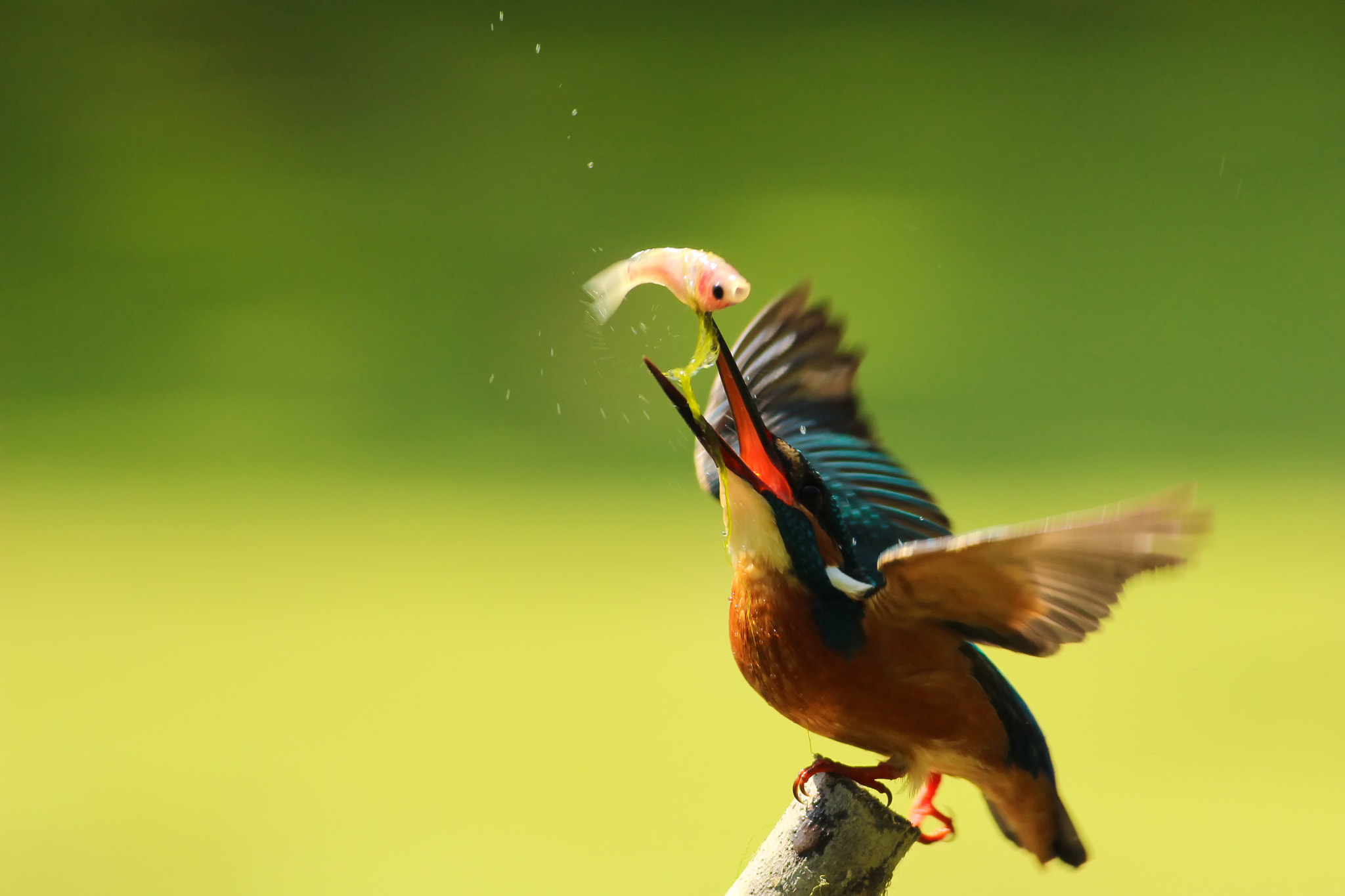 Photograph Common Kingfisher in its element by Boris Smokrovic on 500px