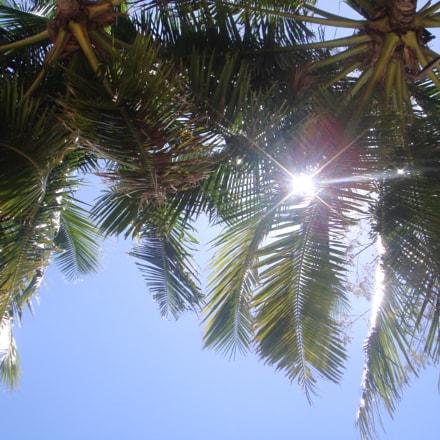 coconut tree, Sony DSC-T70