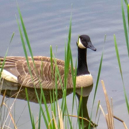 Duck, Canon POWERSHOT ELPH 320 HS