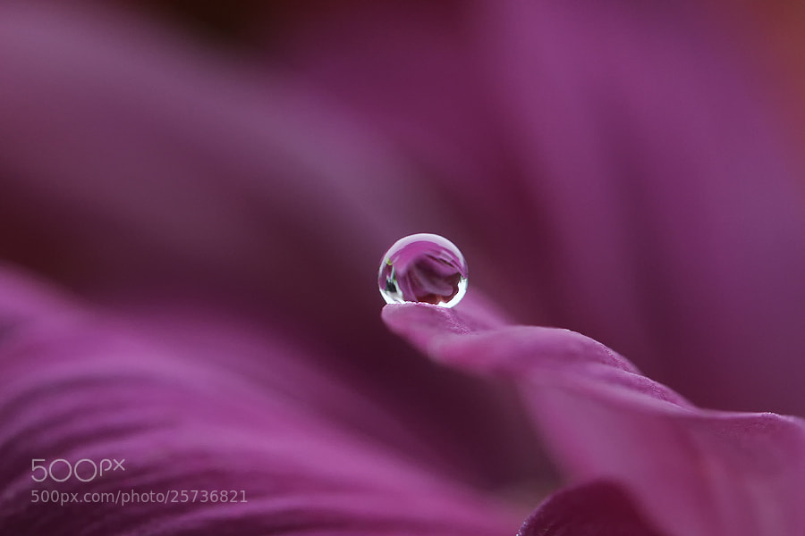 Photograph I believe in you by Diens Silver on 500px