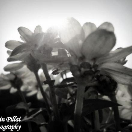 FLOWER KISSING THE SUN, Sony DSC-W320