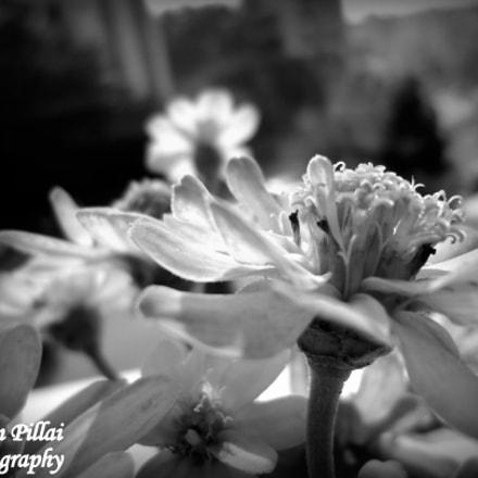 beauty of nature, Sony DSC-W320