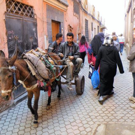 Marrakech donkey, Fujifilm FinePix S8100fd