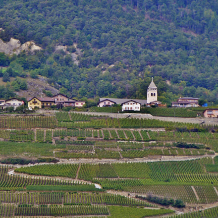 Switzerland's vineyards, Panasonic DMC-ZS10