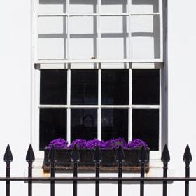 The purple contrast