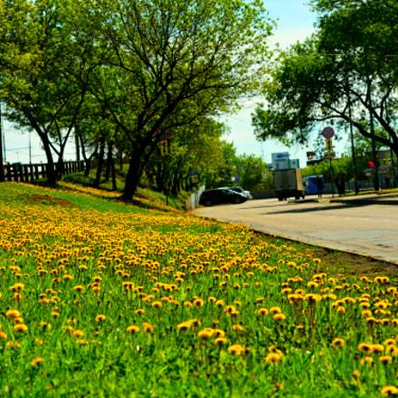 City flower bed, Nikon D7100, AF-S Nikkor 24-120mm f/4G ED VR