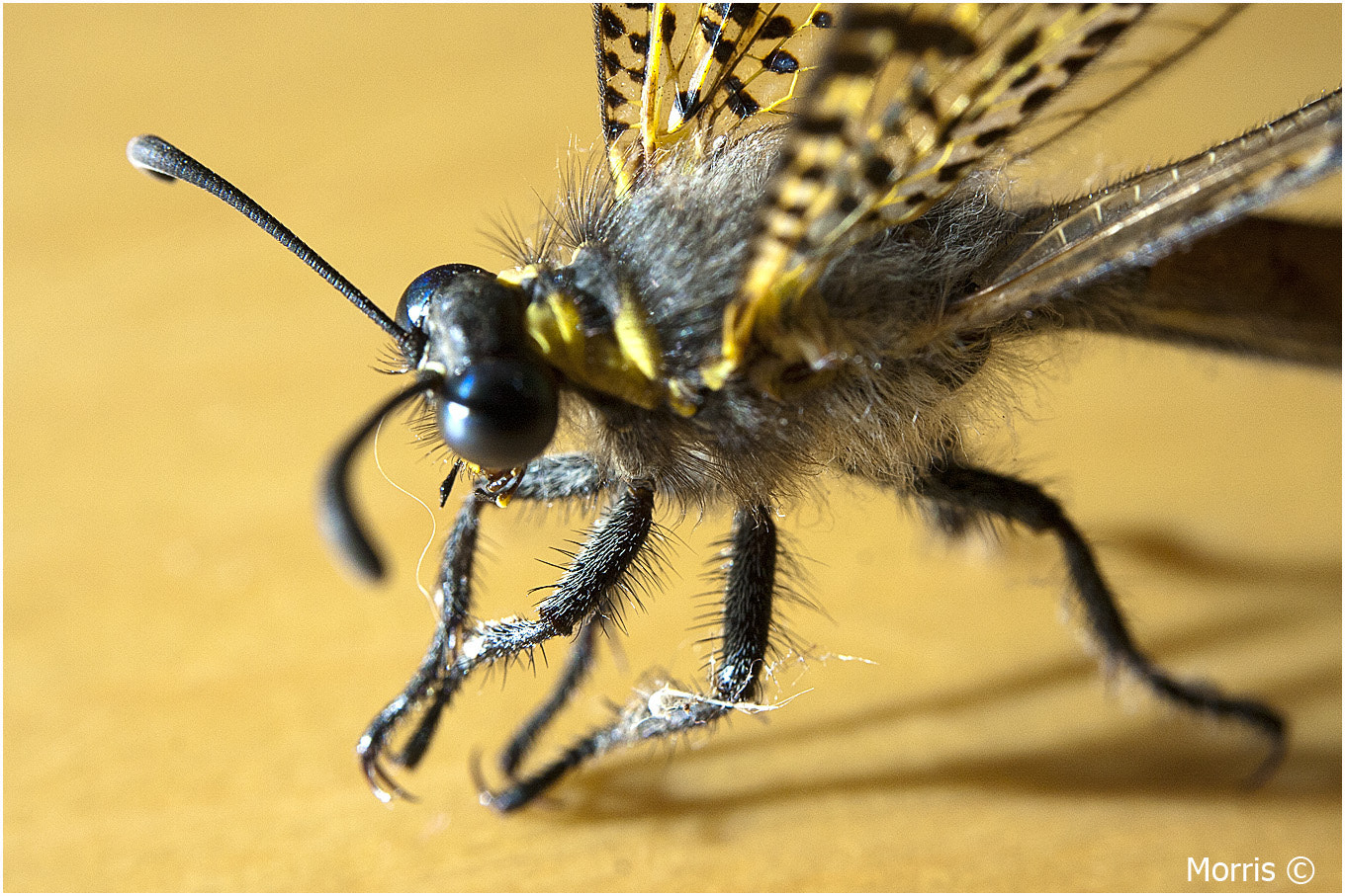 Photograph Antlion by Dave Morris on 500px