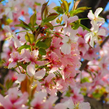 Spring!, Canon POWERSHOT SX600 HS