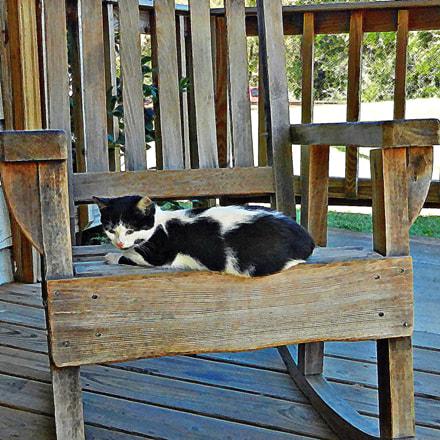 Rocking Chair Kitty, Nikon COOLPIX S9100