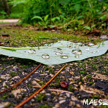 Raindrops, Nikon COOLPIX S3700