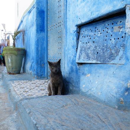 Rabat cat, Fujifilm FinePix S8100fd