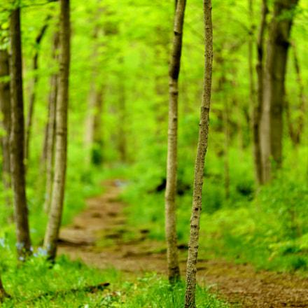Bend in the Path, Nikon D800E, Sigma APO Macro 150mm F2.8 EX DG HSM