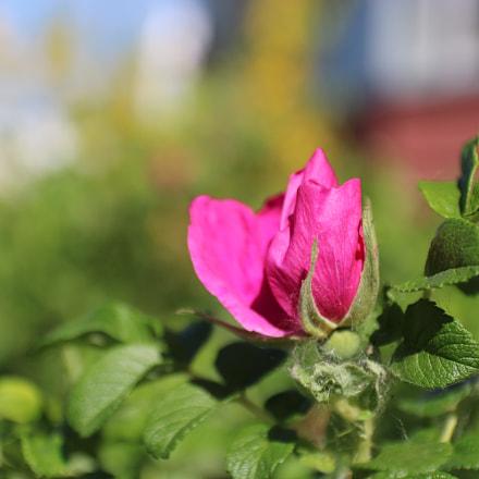 IMG, Canon EOS 750D