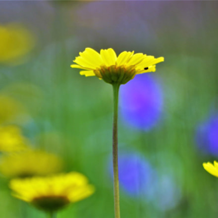 the flowers, they're my, Pentax K-50, HD PENTAX-DA 55-300mm F4-5.8 ED WR