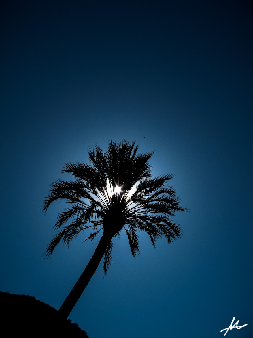 Photograph Palm Shadow by Mickey Shnaiderman on 500px