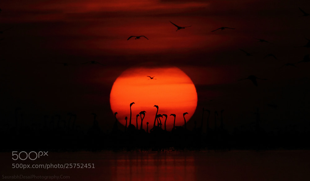 Photograph Sun-set at Flamingo City by Saurabh Desai on 500px