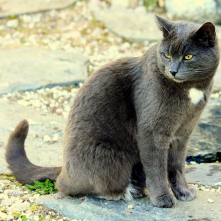 Niilo-cat looking marveling, What, Canon EOS 700D, Canon EF 70-300mm f/4.5-5.6 DO IS USM