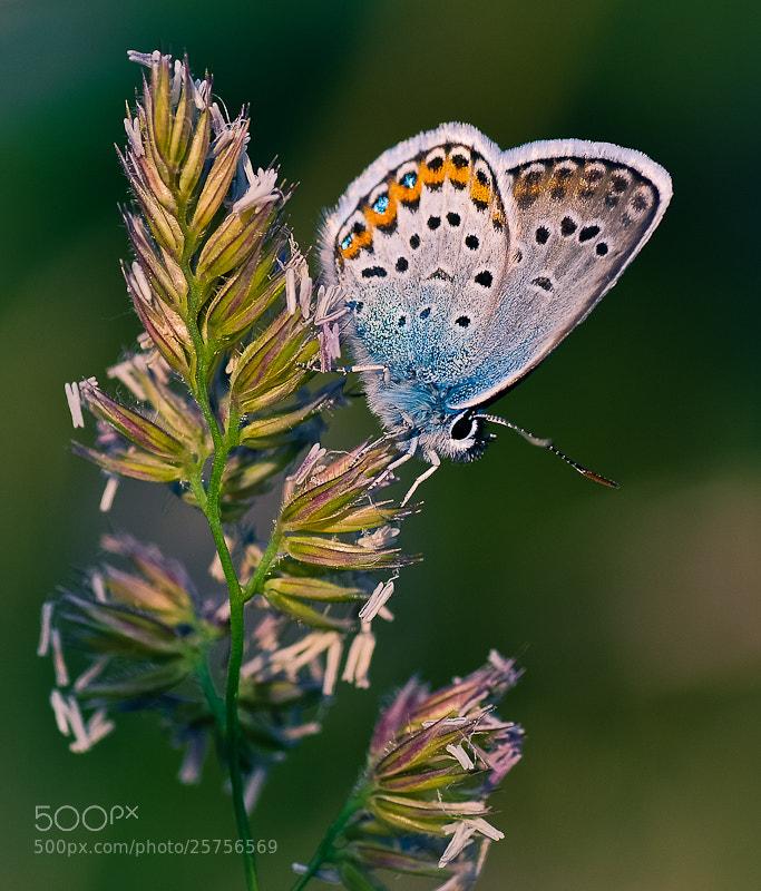 Photograph Butterfly on a walk by Brane Kosak on 500px