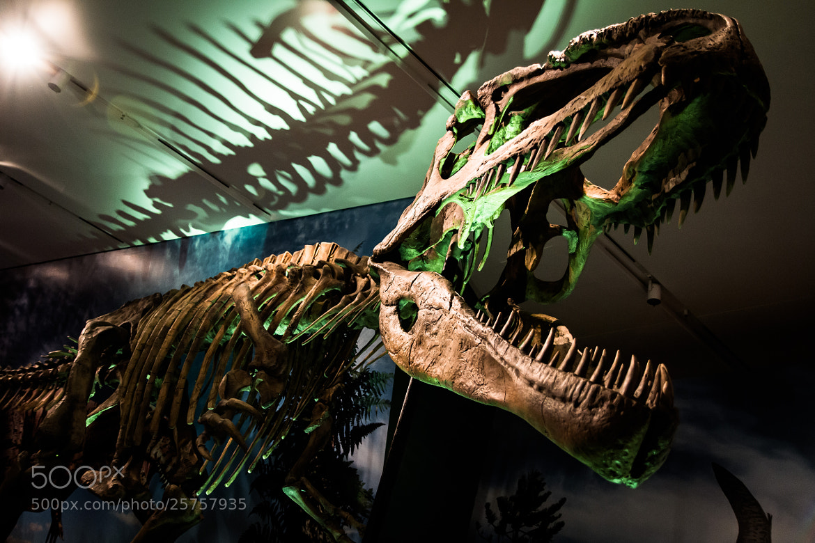 Photograph Giganotosaurus by Eric Akaoka on 500px
