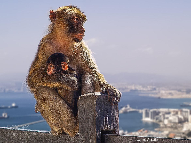 Photograph Gibraltareños by Luis Miguel Villalba on 500px