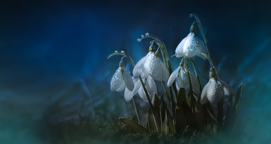 spring mesenger in blue by Sonja ❤️ Probst on 500px.com