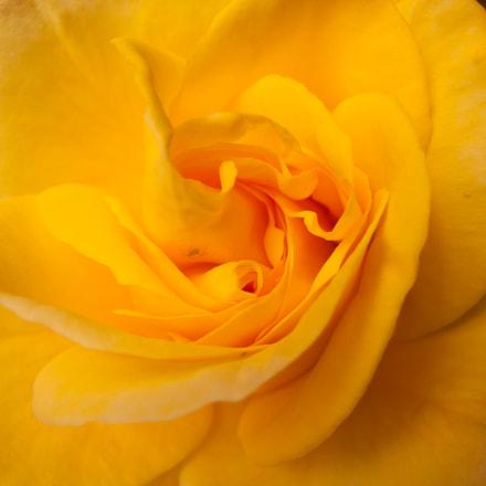 interior de una flor, Canon POWERSHOT S70