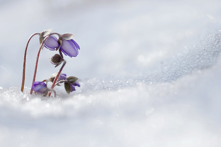 Photograph Spring is coming by Marek Mierzejewski www.butterfly-photos.org on 500px