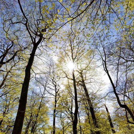 Nature waken up, Canon EOS 6D MARK II