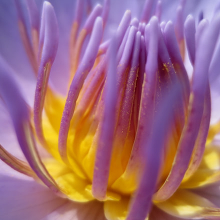 Water lily., Canon POWERSHOT ELPH 320 HS