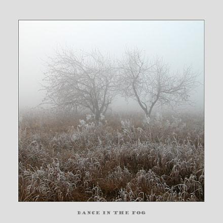Dance in the fog, Nikon E5700