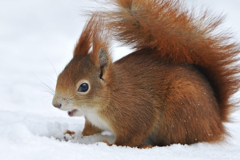 Photograph Happy Squirrel by Josef Gelernter on 500px